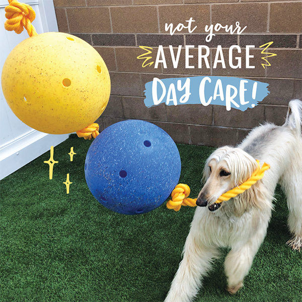 Enrichment at Camp Bow Wow Dog Day Care