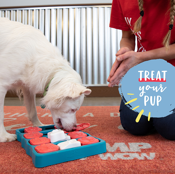 Individual Enrichment at Camp Bow Wow Dog Day Care