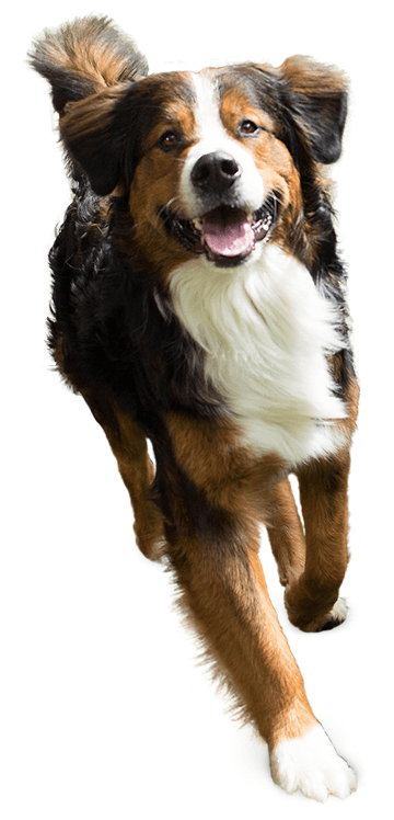 image of a happy dog