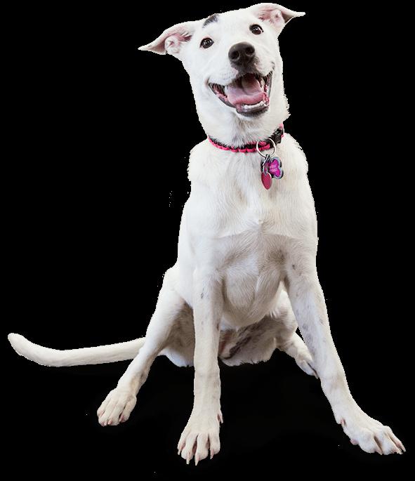 image of a smiling dog